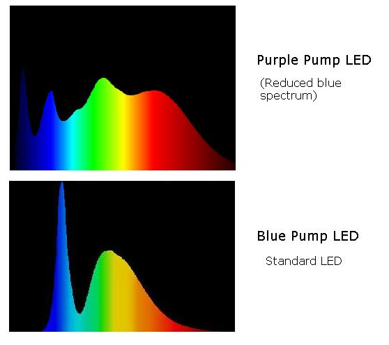 Spectral Difference Between Blue Pump and Purple Pump LEDs